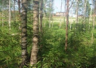 Поселок Подушкино