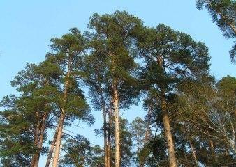 Поселок Успенские леса
